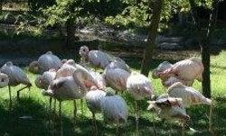 Ankara Hayvanat Bahçesi logo